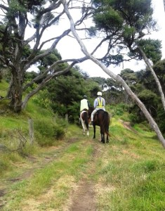 Horse riding 021