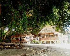 Our fales on the beach under the HUGE banyan tree.