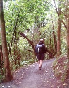 Enjoying the Ketetahi Track through the forest.